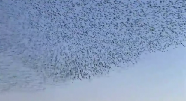 Macrowikinomics Murmuration